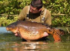 28kg plus comon carp lac de grosley france fishing copia
