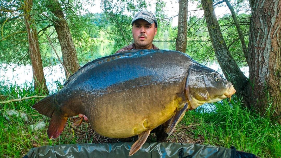 Iktus big carp