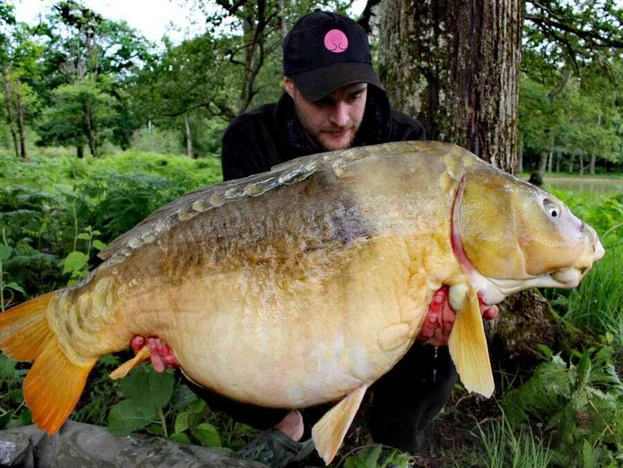 Huge carp fishing camalo france